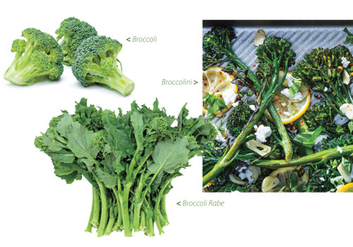 What's the Difference between Broccoli, Broccolini and Broccoli Rabe?