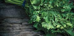 A Journey Through Nutrient-Dense Foods