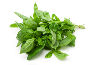 Cookin' with Fresh Herbs - Basil