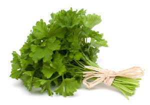 Cookin' with Fresh Herbs - Cilantro