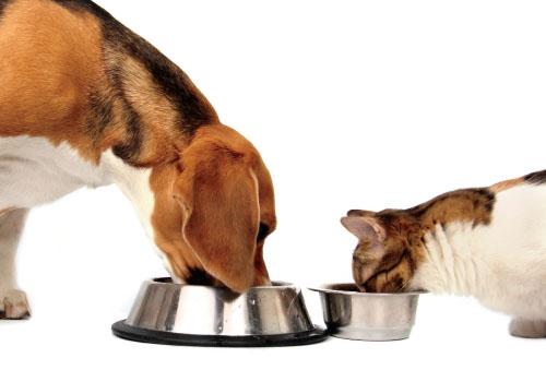Healthy Diet, Healthy Pet