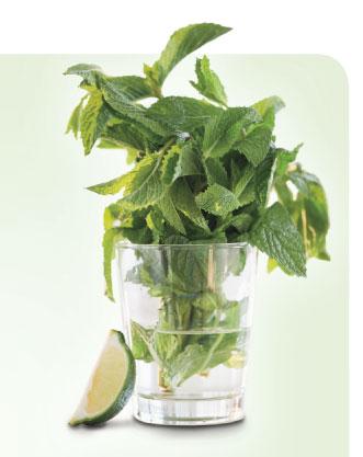 Irresistible Herbs