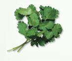 Irresistible Herbs - Cilantro